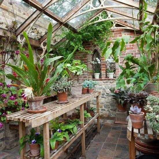 11 plantas que melhoram a qualidade do ar