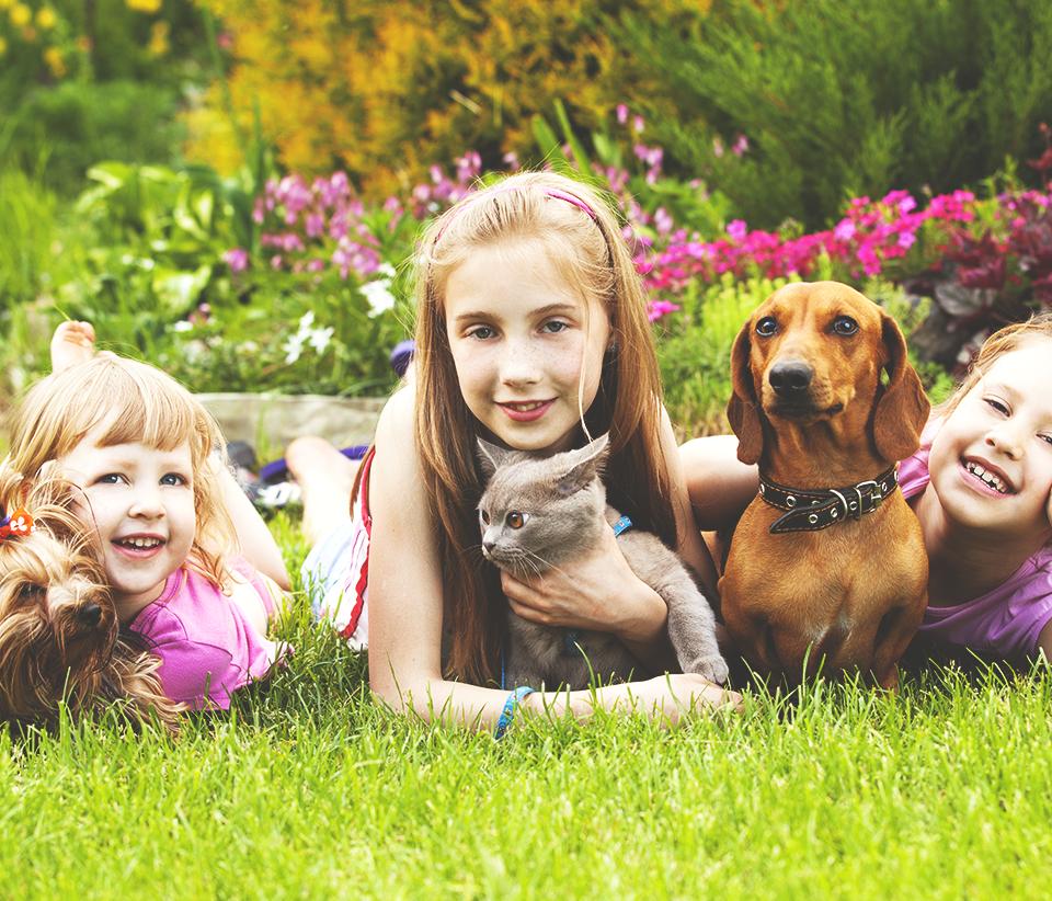 Pelos de gatos e cachorros provocam alergia?